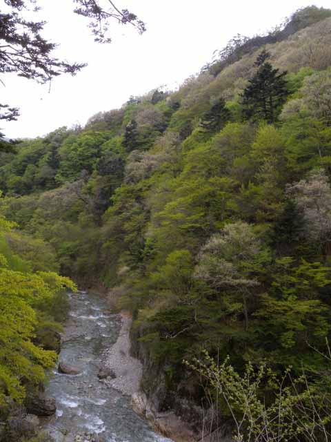 新緑の様子_赤谷林道.jpg
