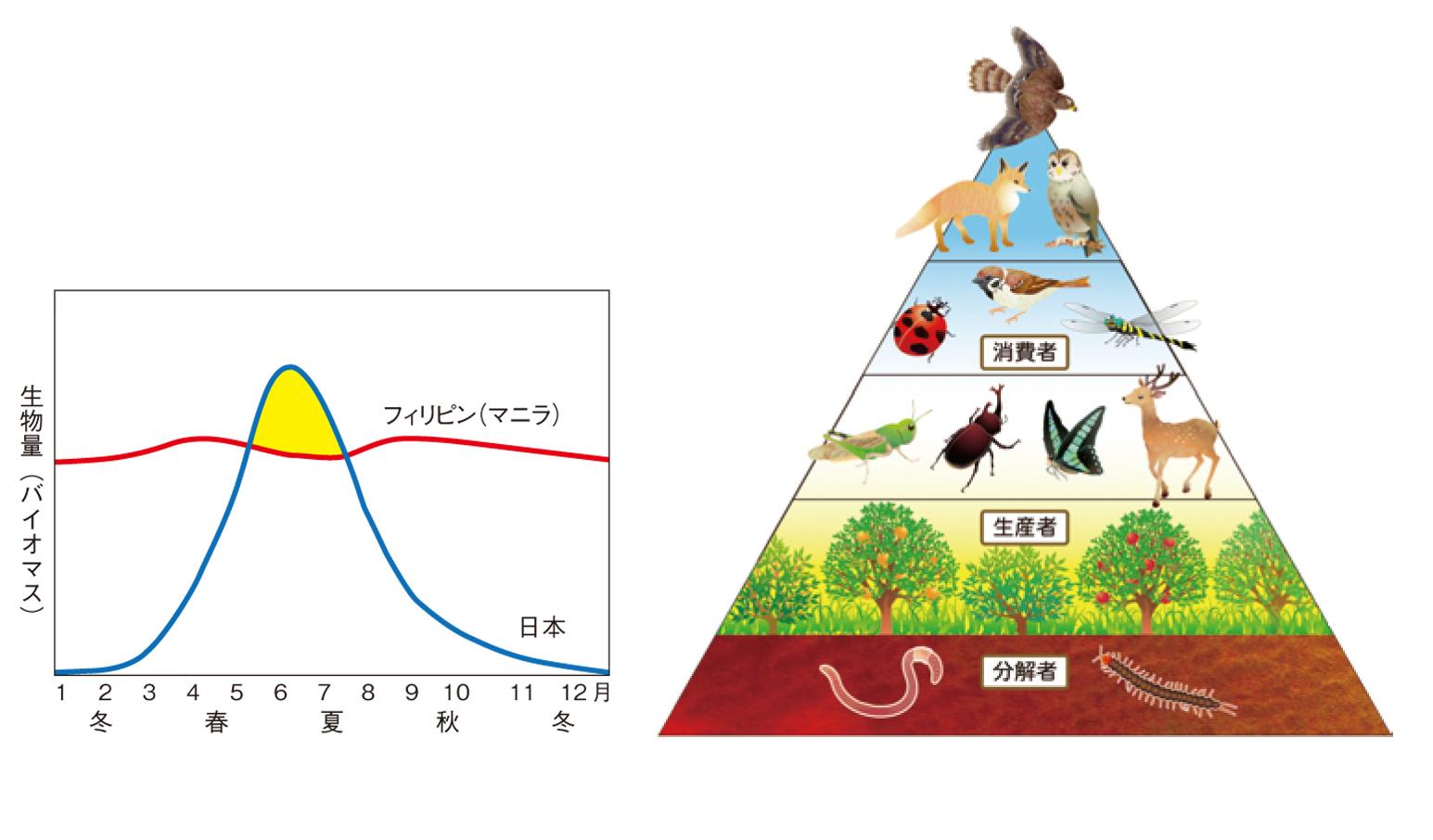 ピラミッド 生態 系
