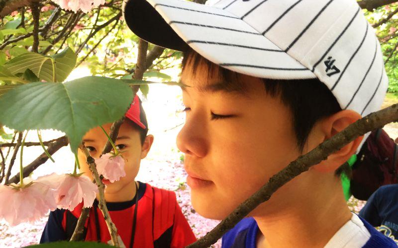 写真:桜の匂いを嗅ぐ子供