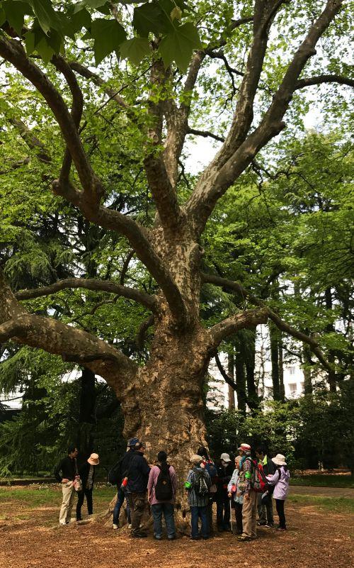 写真:老木の樹皮の手触りを確かめる参加者
