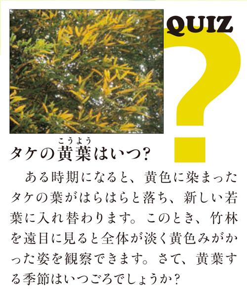 クイズ「タケの黄葉はいつ?ある時期になると、黄色に染まったタケの葉がはらはらと落ち、新しい若葉に入れ替わります。このとき、竹林を遠目に見ると...」