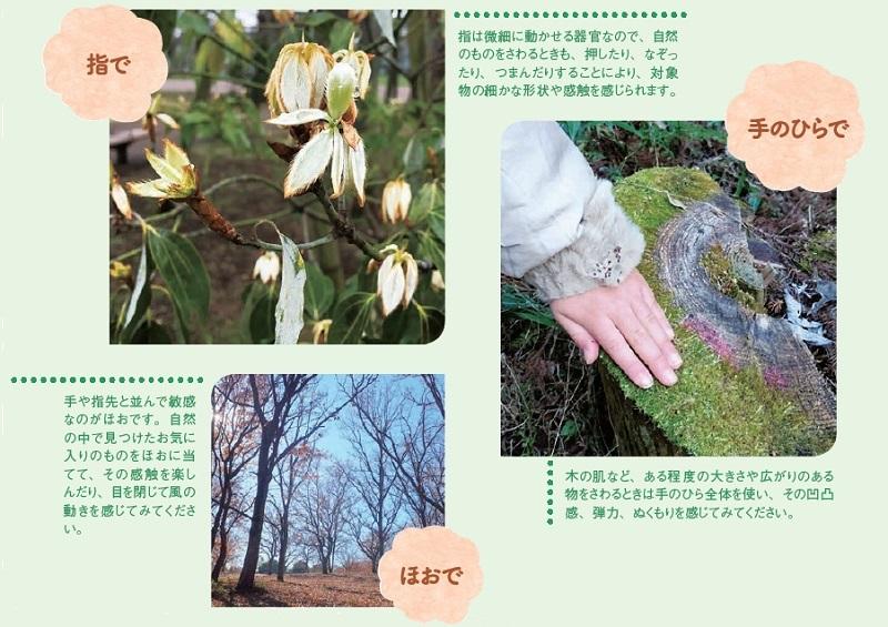 指で:押したり、なぞったり、つまんだりすることにより、対象物の細かな形状や感触を感じられます。手のひらで:木の肌など、ある程度大きさや広がりのある物...