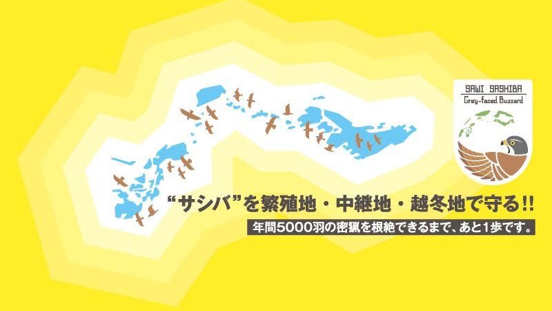 サシバを繁殖地・中継地・越冬地で守る!!年間5000羽の密猟を根絶できるまで、あと1歩です。