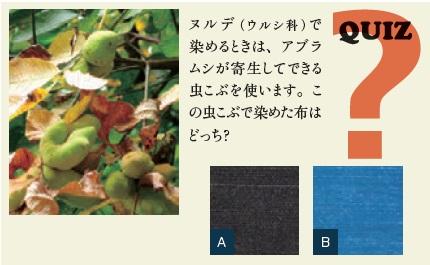 QUIZ: ヌルデ(ウルシ科)で染めるときは、アブラムシが寄生してできる虫こぶを使います。この虫こぶで染めた布はどっち?