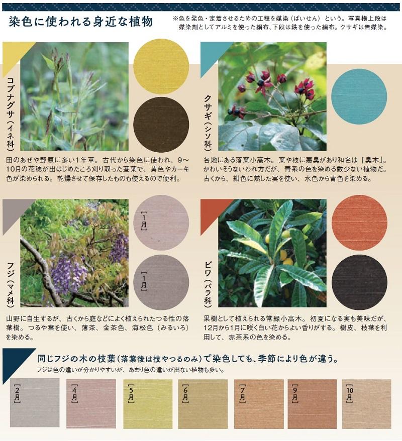 染色に使われる身近な植物:クサギ(シソ科)、ビワ(バラ科)、コブナグサ(イネ科)、フジ(マメ科)....同じフジの木の枝葉(落葉後は枝やつるのみ)で染色しても、季節により色が違う。