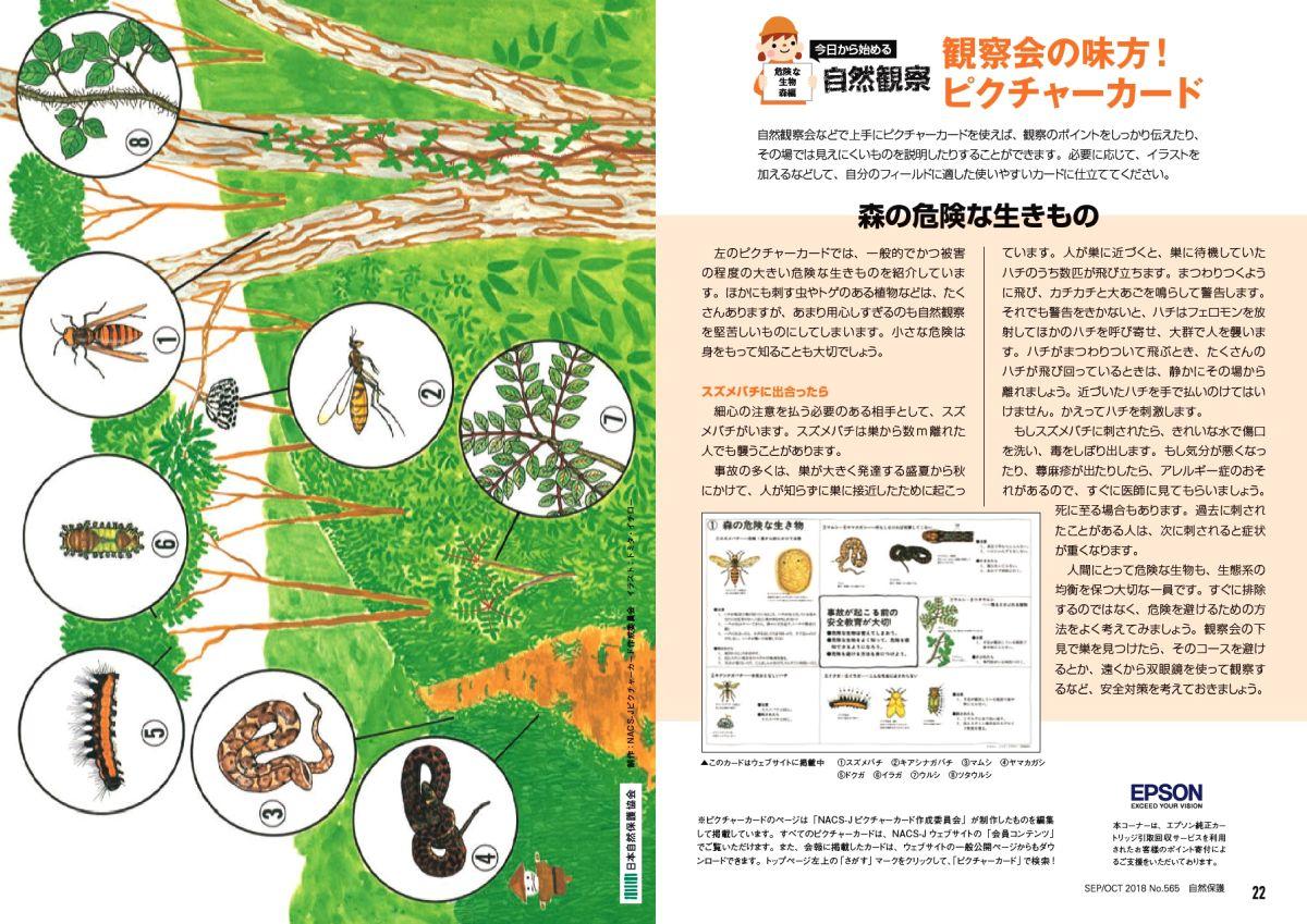 ピクチャーカード「森の危険な生きもの」