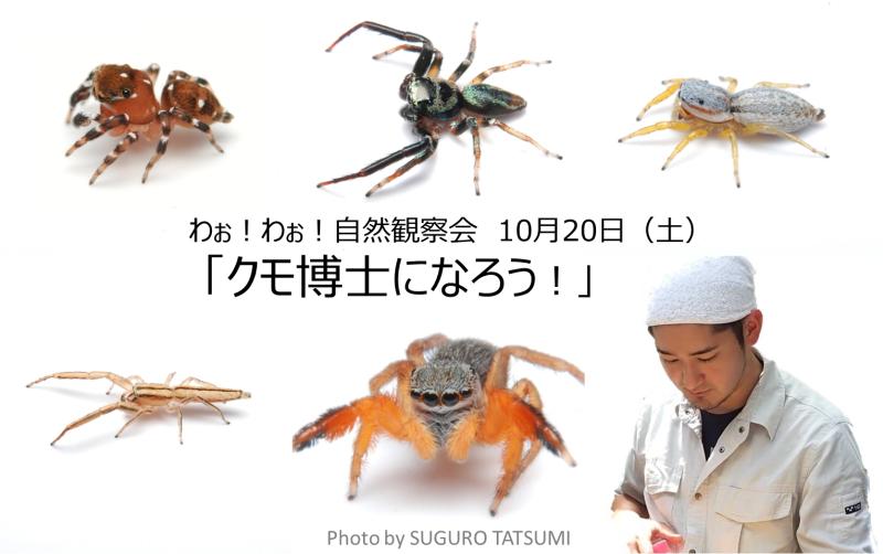 わぉ!わぉ!自然観察会「クモ博士になろう!」ヘッダー画像(photo by suguro tatsumi)