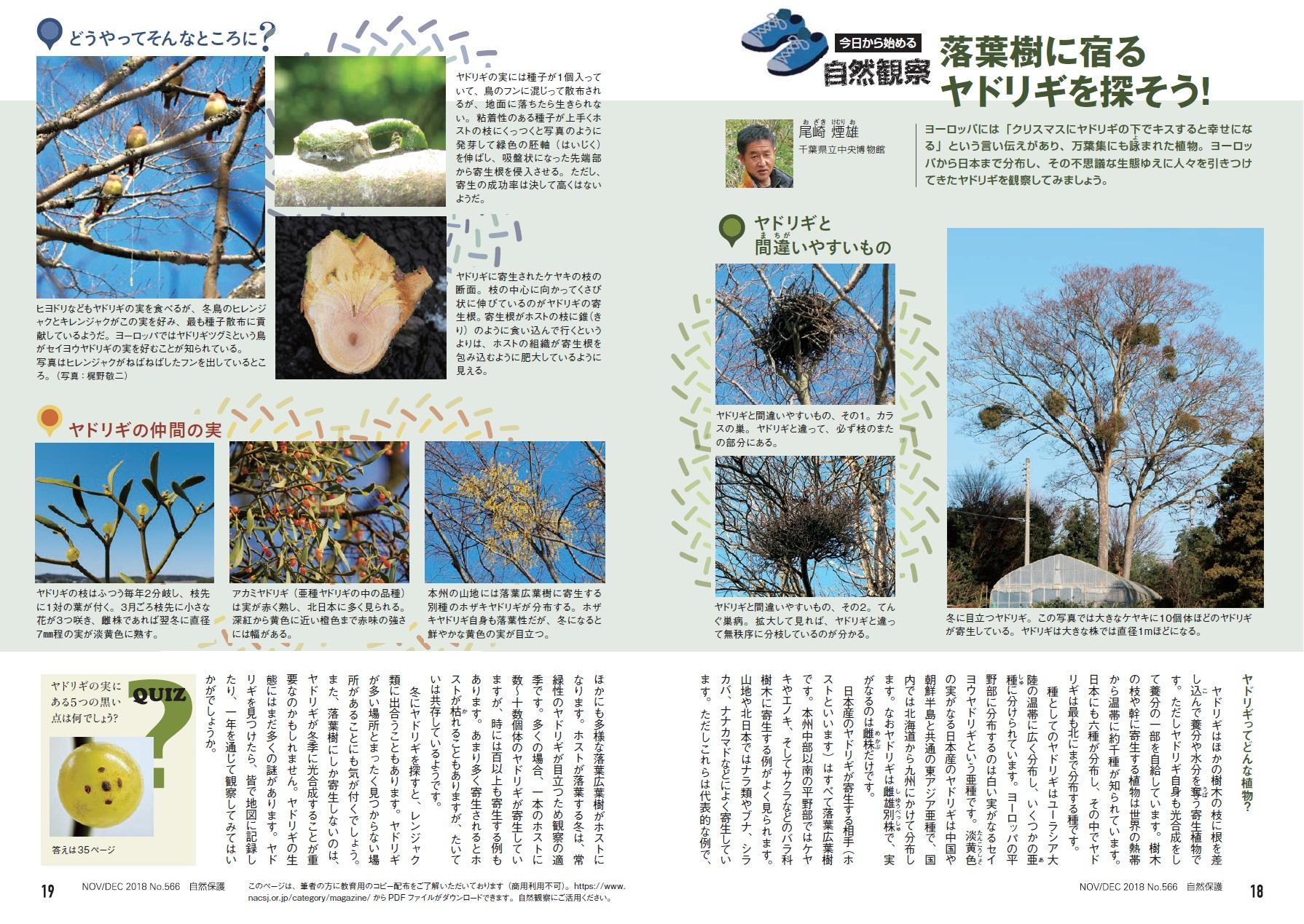 自然保護No566今日から始める自然観察ページ画像大
