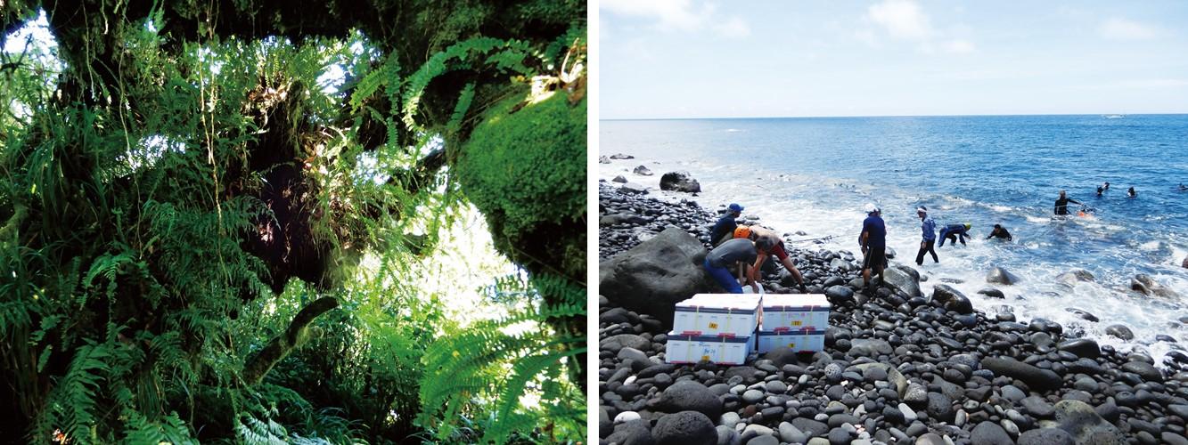 南硫黄島の写真2