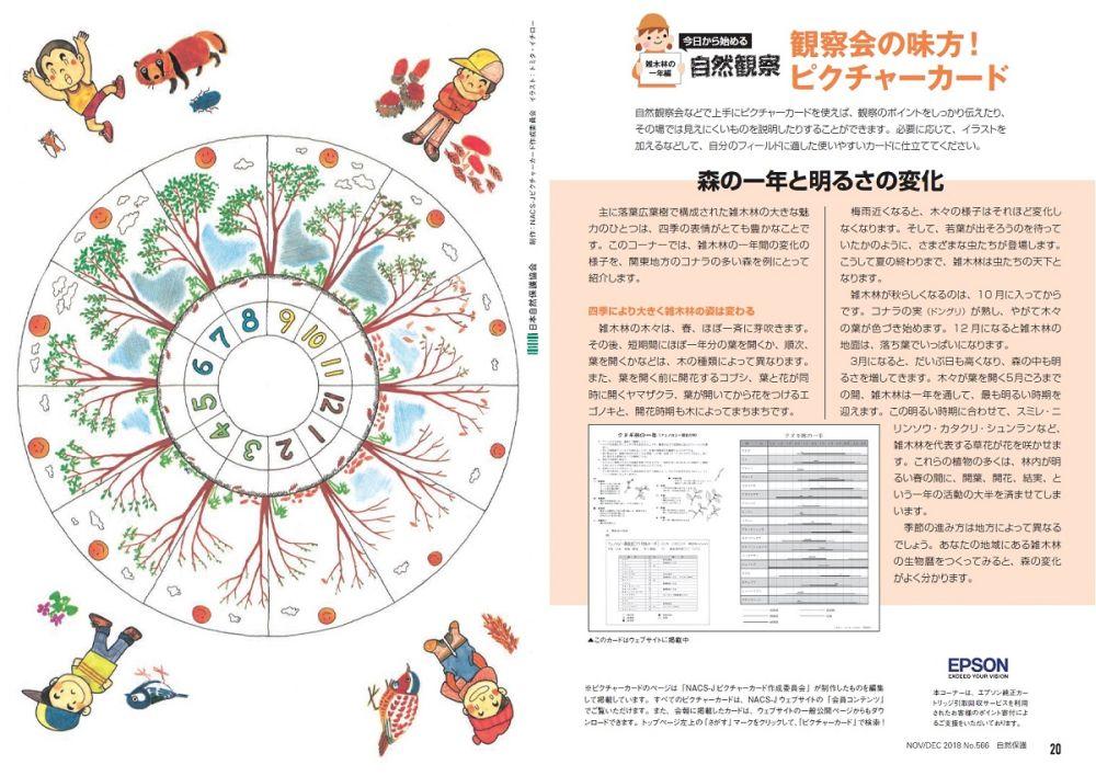 自然保護No566ピクチャーカード雑木林の一年編(画像)