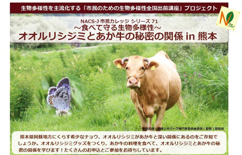 「◆ シリーズ71◆ オオルリシジミとあか牛の秘密の関係in熊本」ビルボード