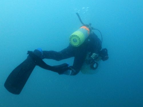 深場に潜っていく西平さん(写真)
