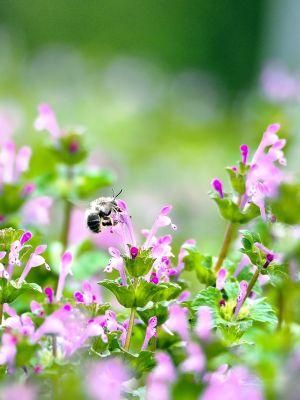 飛び交う蜂の写真