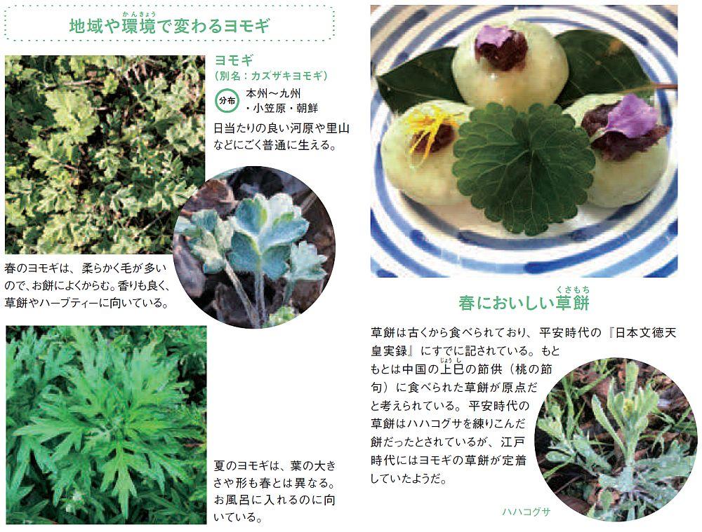 春においしい草餅 草餅は古くから食べられており、平安時代の『日本文徳天皇実録』にすでに記されている。もと もとは中国の上巳の節供(桃の節句)に食べられた草餅が原点だと考えられている。平安時代の草餅はハハコグサを練りこんだ餅だったとされているが、江戸時代にはヨモギの草餅が定着していたようだ。