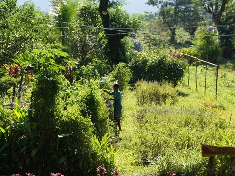 草木の生い茂った庭と、その中央で草木の手入れをする人の写真