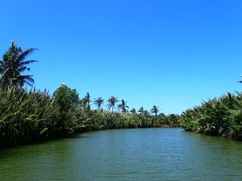 川の両岸に生い茂るマングローブ写真