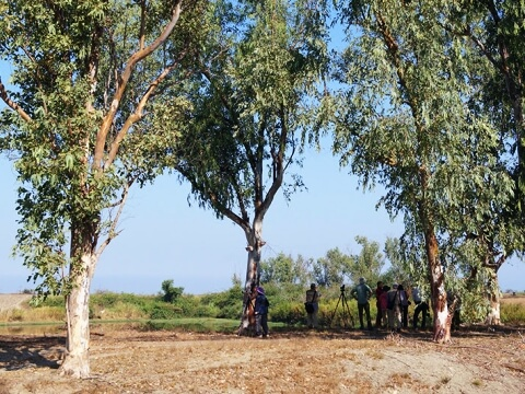 大きな木の陰でバードウォッチングを楽しむ参加者の写真