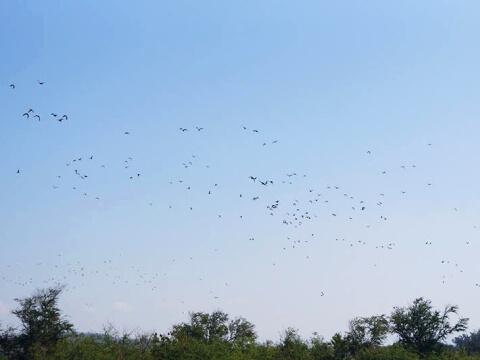 大空に舞う無数の鳥の写真