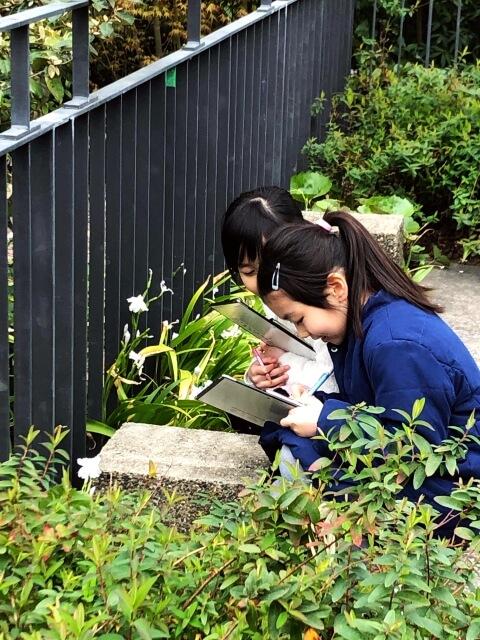 しゃがんで草花を観察する女の子二人(写真)