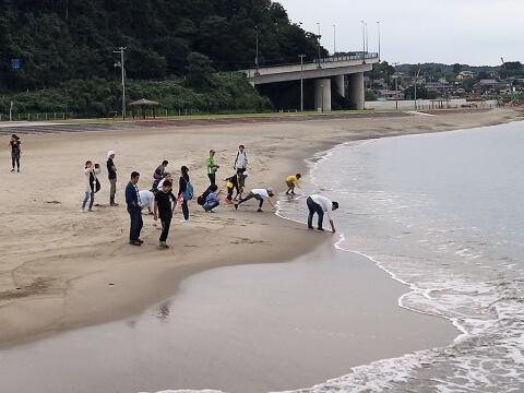 砂浜で貝殻さがしをする参加者(遠景写真)