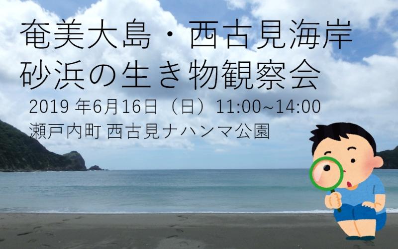 奄美大島・西古見海岸 砂浜の生き物観察会