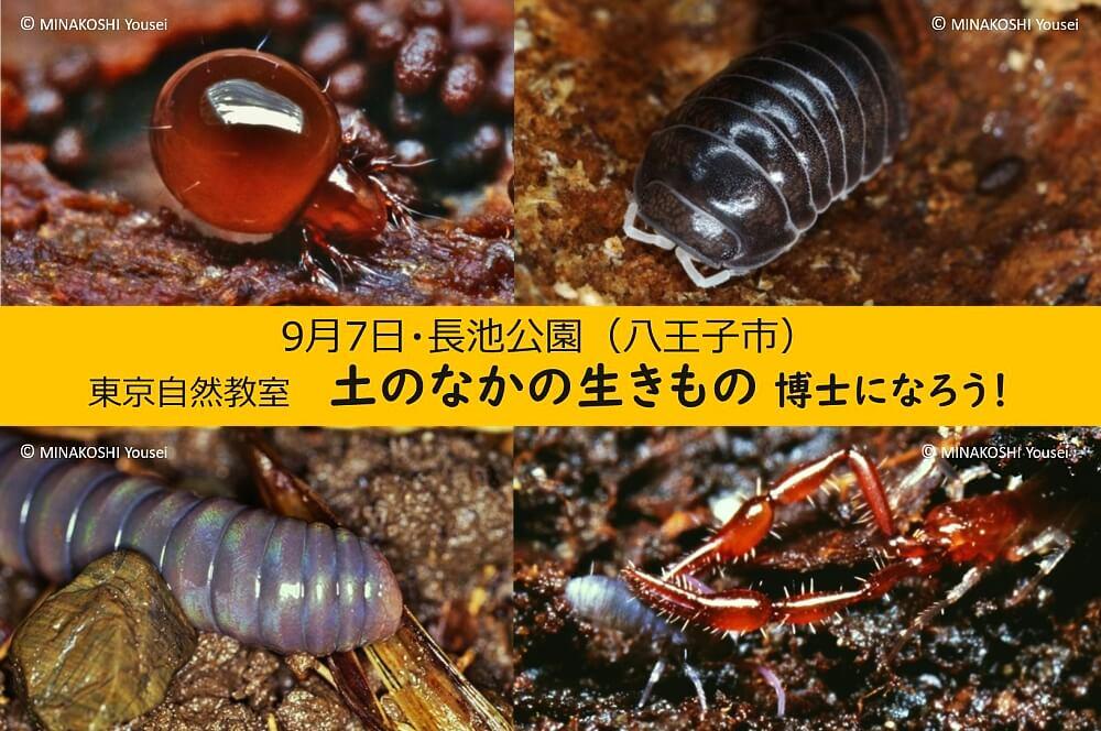 土のなかの生きもの博士になる!キービジュアル(ダンゴムシ等虫4匹)写真