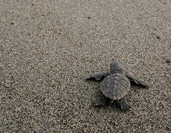 なくなりそうな自然を守る:辺野古・大浦湾の保全