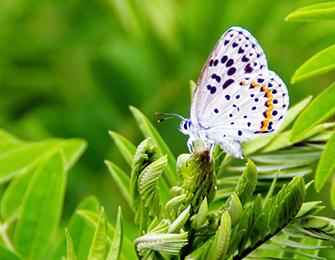 日本自然保護協会 ボランティア登録制度について  ~ボランティア登録のお願い~