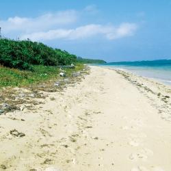 ごみが帯状に溜まっている砂浜の写真