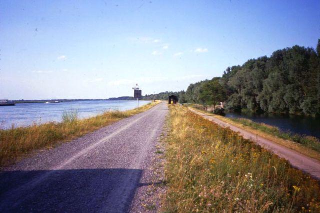 左にライン川、道路を挟んで右側に河畔林のある写真
