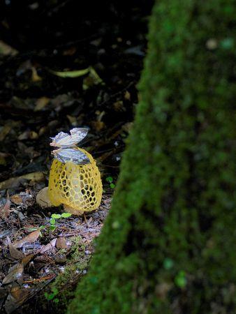 黄色い網笠の上に蝶がとまっている写真
