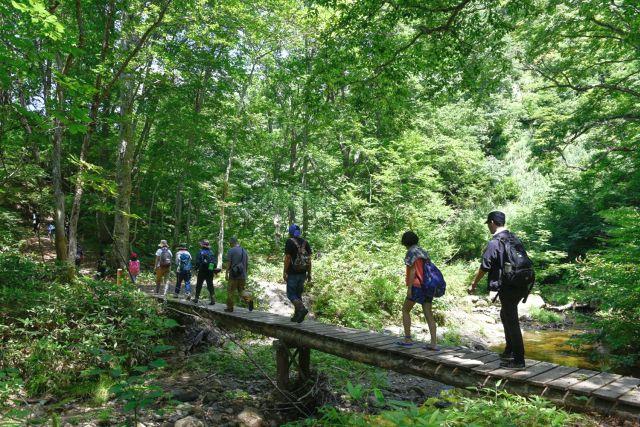 木道を歩く参加者の写真