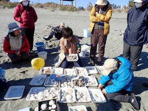 貝殻を分類している自然観察会の写真