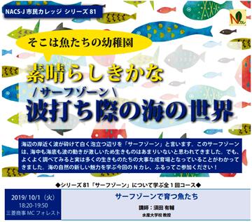 市民カレッジ81素晴らしきかな波打ち際の海の世界のメインビジュアル