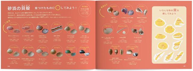 砂浜ノート砂浜の貝殻解説ページ