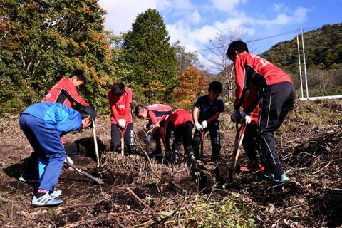大人数で大きな木の根を掘り出している写真