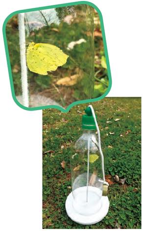昆虫観察ボトルの中の黄色い蝶の写真