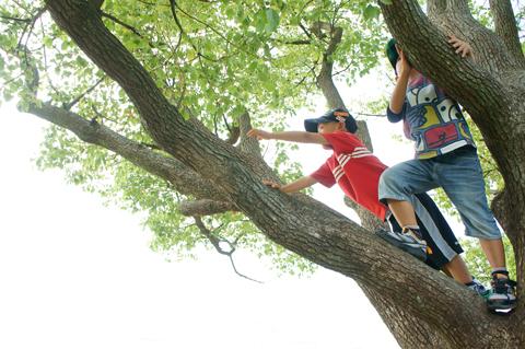 木登りしている子どもの写真