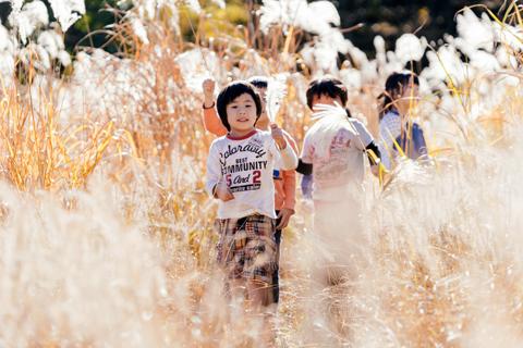 すすき野原で遊ぶ子どもの写真