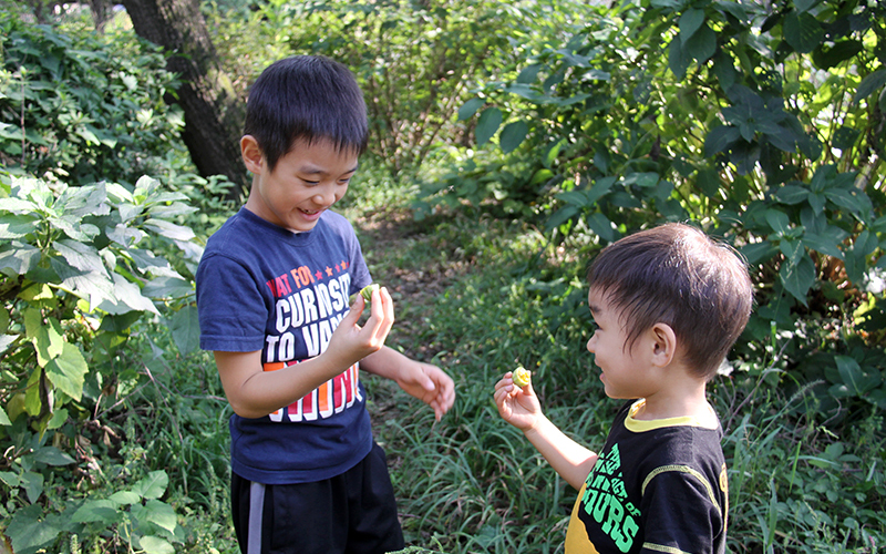 植物の実を見て喜ぶ兄弟の写真
