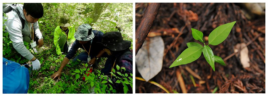 若い木を探す観察会イメージの画像
