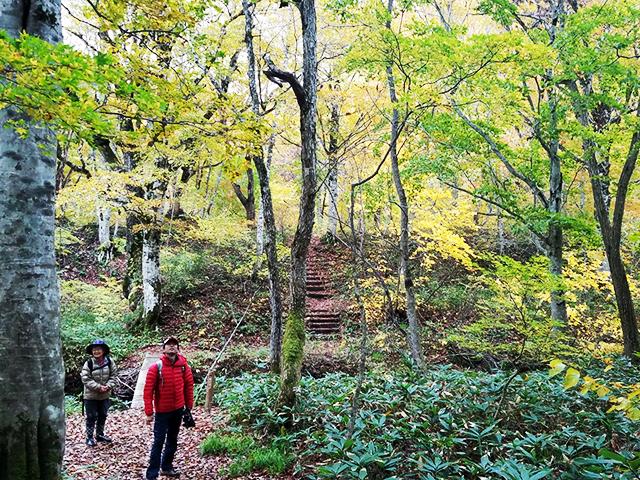 鈴木サナエさんと恵みの森を散策している写真
