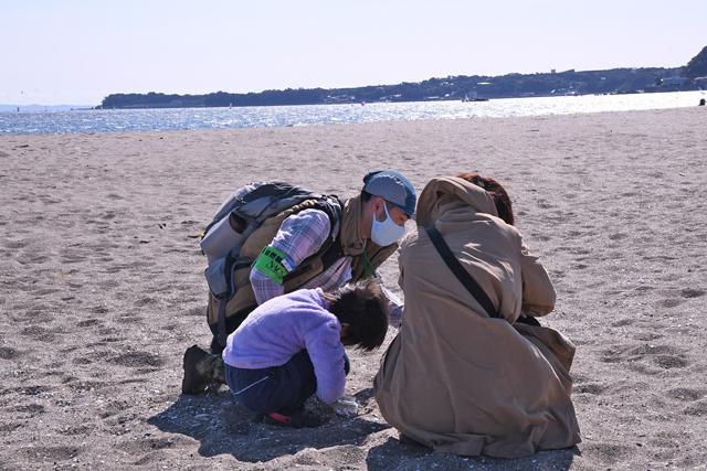 貝殻を探す親子の写真
