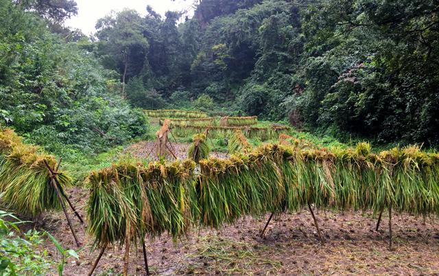 復田した三浦半島の谷戸の写真