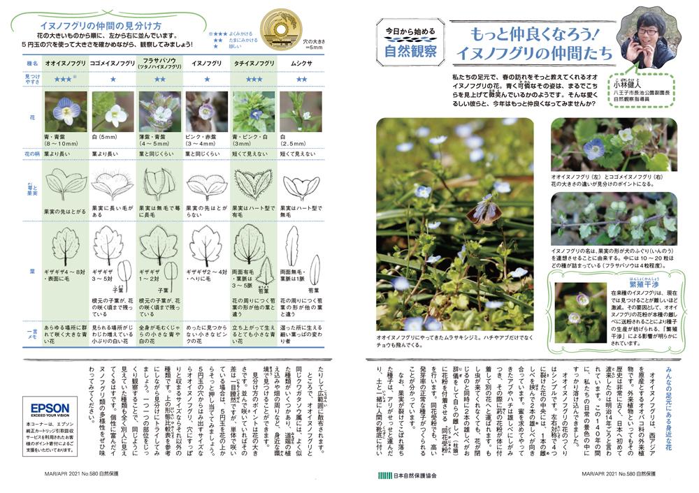 会報『自然保護』No.580連載頁の画像