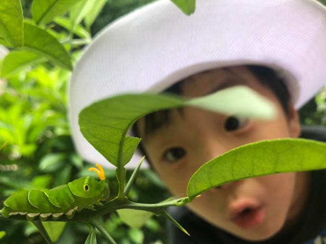 大きな緑色の芋虫に驚く少年の写真