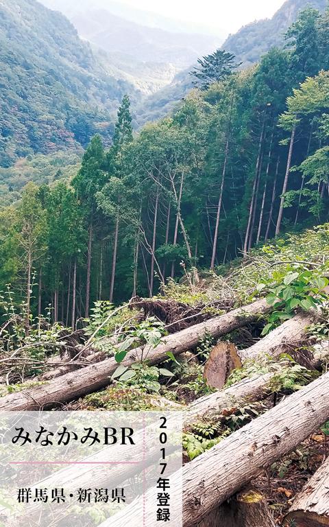 伐採した人工林の画像