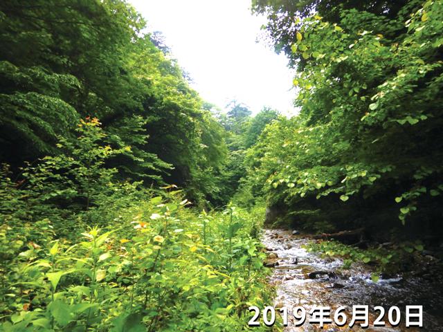 植物に覆われてた2号ダム付近の写真