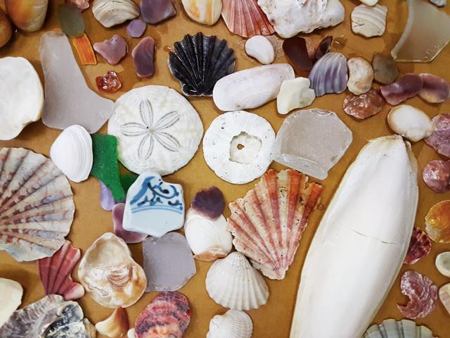 いろいろな貝殻と破片の写真