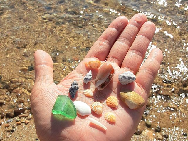 貝殻とシーグラスのアップ写真